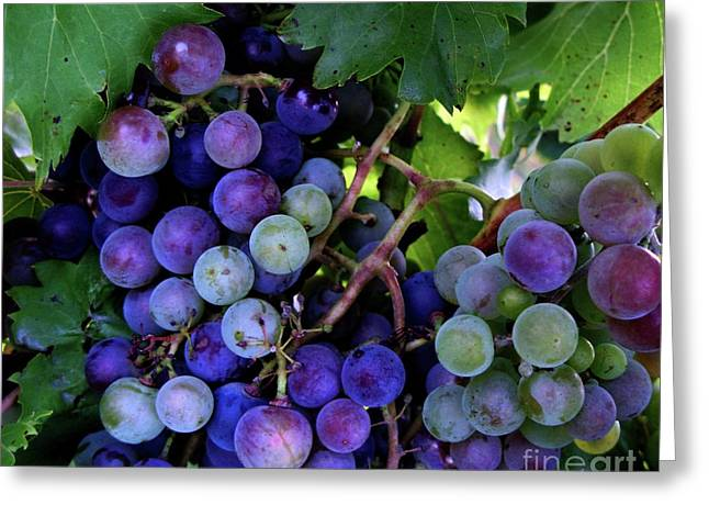 Greeting Card featuring the photograph Dark Grapes by Carol Sweetwood