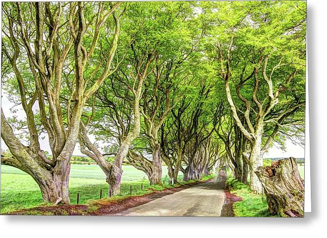 Dark Hedges, Game Of Thrones Greeting Card by Bob Cuthbert