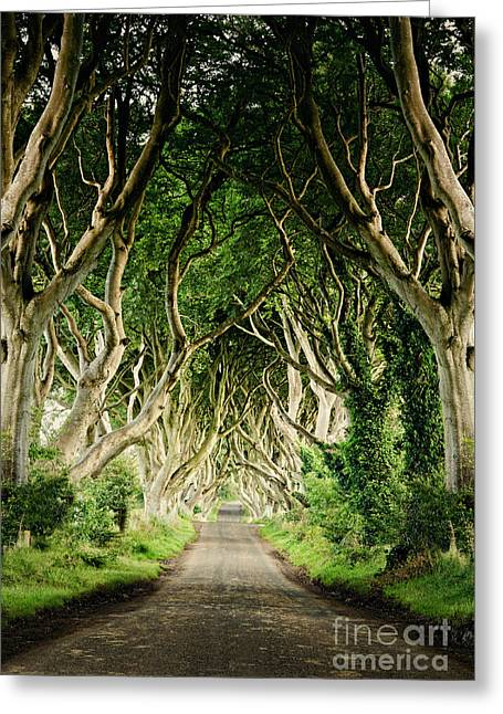 Dark Hedges Greeting Card by Michelle McMahon