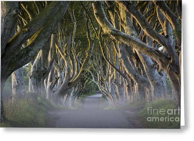 Dark Hedges - Misty Morning Greeting Card by Brian Jannsen