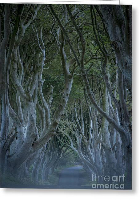 Dark Hedges - Misty Night Greeting Card by Brian Jannsen