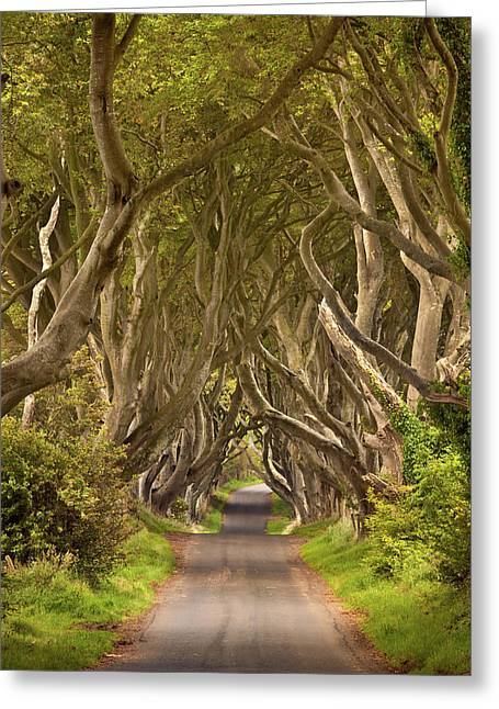 Dark Hedges Greeting Card by Pawel Klarecki