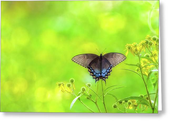 Greeting Card featuring the photograph Dark Morph Female Tiger Swallowtail Butterfly by Lori Coleman