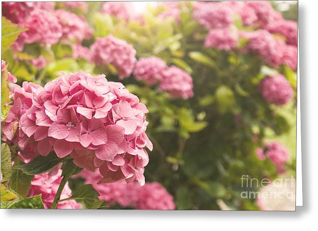 Dark Pink Hydrangea Greeting Card