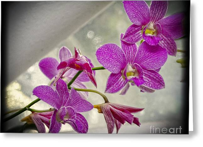 Dark Pink Orchids All In A Row Greeting Card