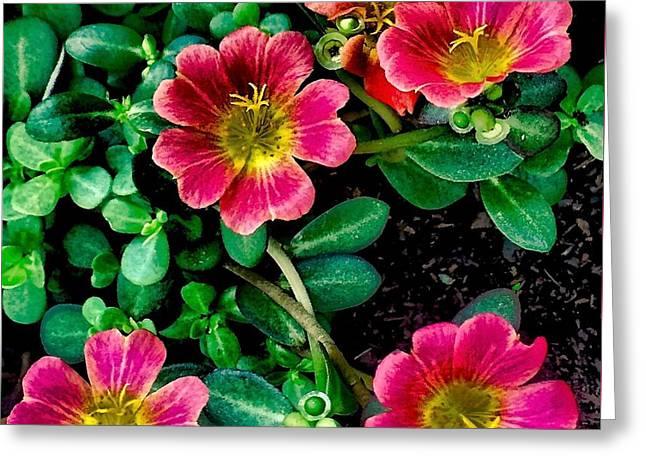 Dark Pink Purselane Flowers Greeting Card