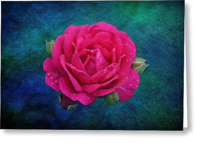 Dark Pink Rose Greeting Card by Sandy Keeton