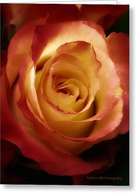 Dark Rose Greeting Card