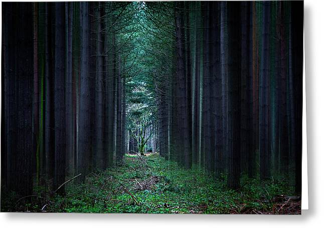 Dark Side Of Forest Greeting Card