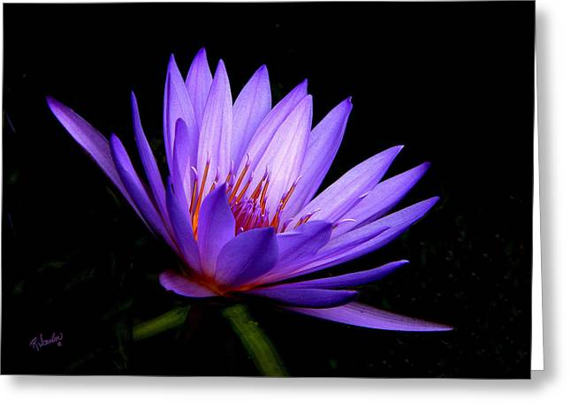Dark Side Of The Purple Water Lily Greeting Card by Rosalie Scanlon