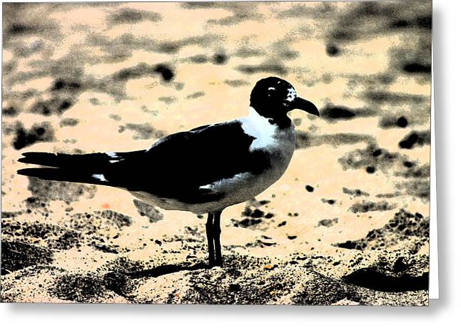 Dark Stroke Seagull Greeting Card by Kimberly Klein