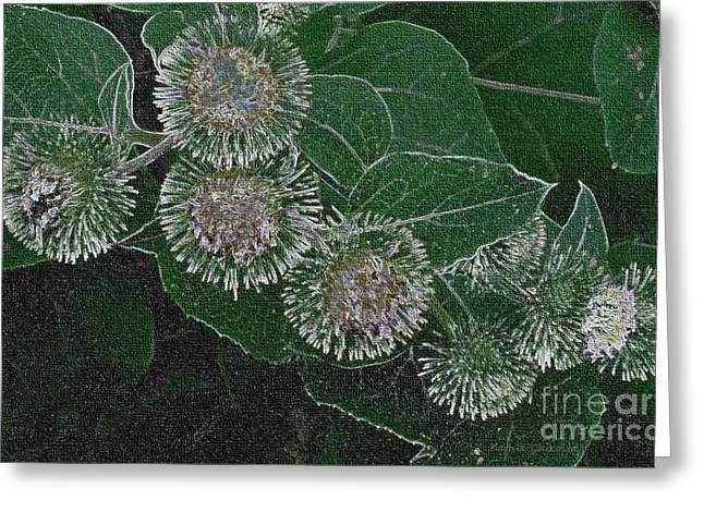 Greeting Card featuring the photograph Dark Thistles by Kathie Chicoine