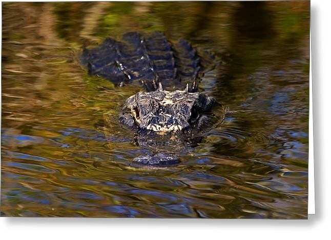 Dark Water Predator Greeting Card by Mike  Dawson
