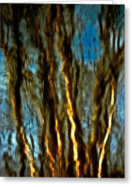 Dark Wood Greeting Card by Gillis Cone