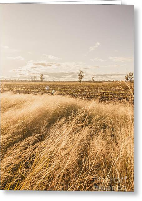 Darling Downs Rural Field Greeting Card by Jorgo Photography - Wall Art Gallery