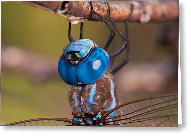 Darner Up Close Greeting Card by Robert Salinas
