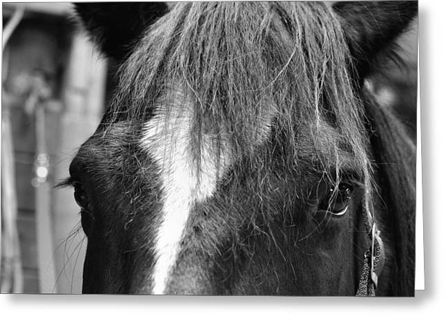 Dart Greeting Card by JAMART Photography