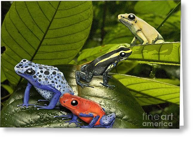Dart-poison Frogs - Poison-dart Frogs Dendrobatidae - Baumsteiger Frosch - Pijlgifkikkers Greeting Card by Urft Valley Art