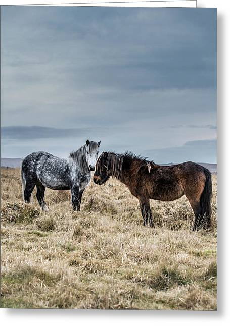 Dartmoor Ponies On Dartmoor Greeting Card