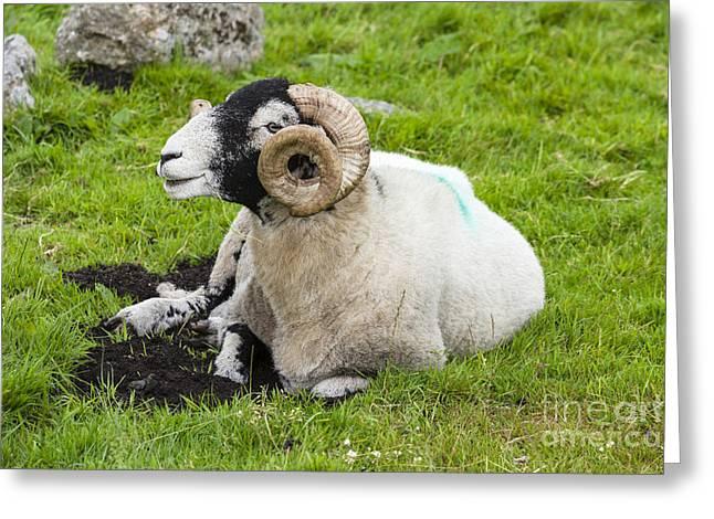 Dartmoor Sheep 2 Greeting Card by Ian Dagnall