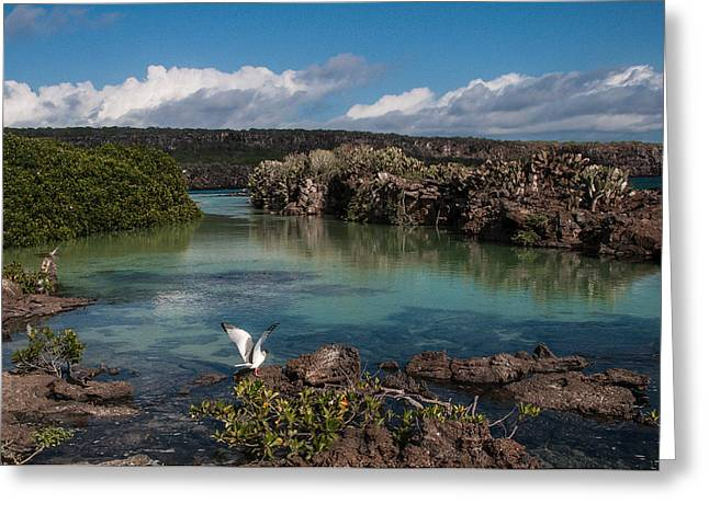 Darwin Bay     Genovesa Island      Galapagos Islands Greeting Card