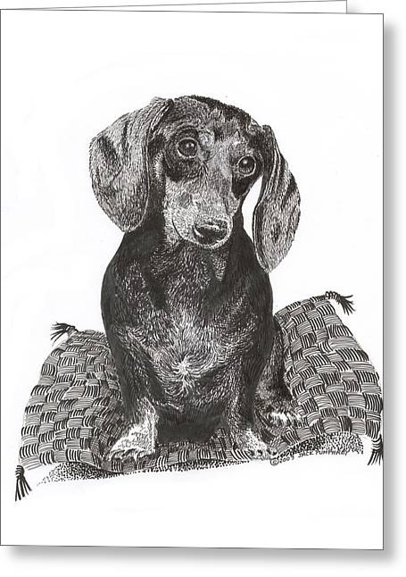 Pen And Ink Framed Prints Greeting Cards - Dashound Pride Greeting Card by Jack Pumphrey