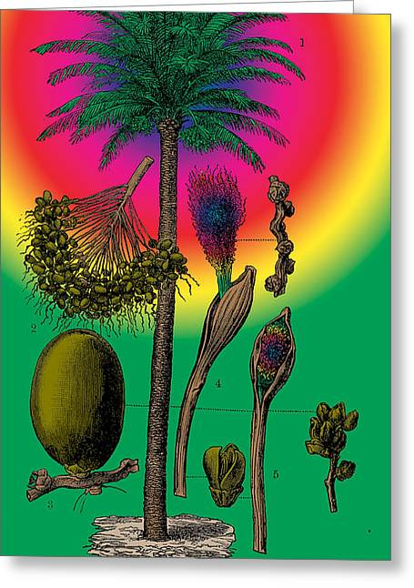 1870 Mixed Media Greeting Cards - Date Palm Greeting Card by Eric Edelman
