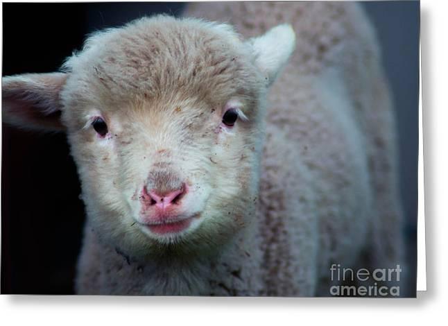 Dave The Sheep  Greeting Card by Naomi Burgess