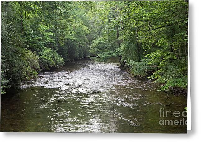 Davidson River In North Carolina Greeting Card