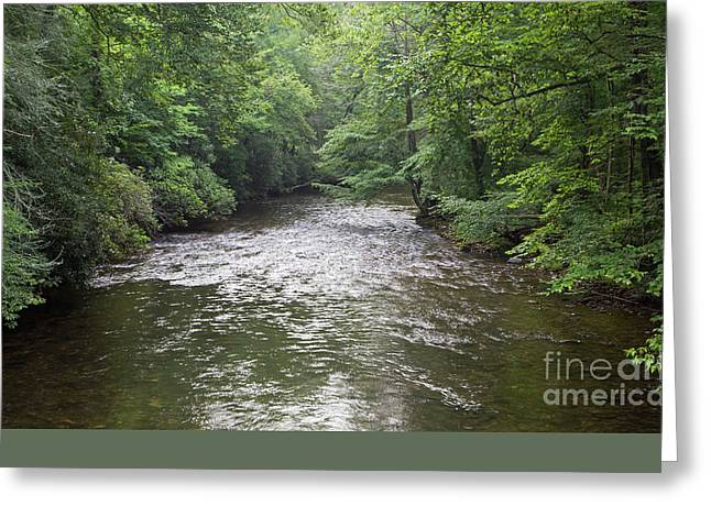 Davidson River Greeting Card