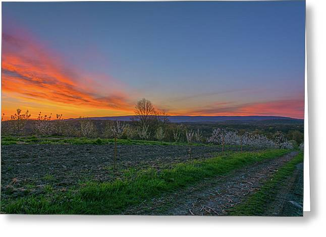 Dawn At Roe Orchards I Greeting Card by Angelo Marcialis