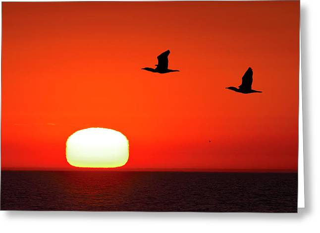 Dawn At The Tip Of Point Pelee Greeting Card