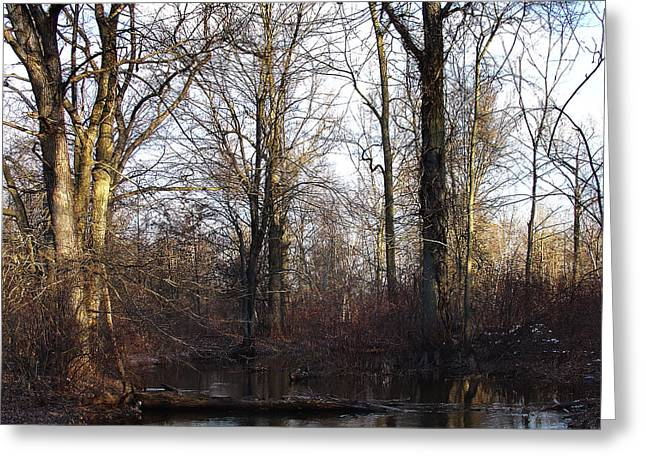 Dawn Brings With It Shadow And Much Reflection Greeting Card by Terrance DePietro