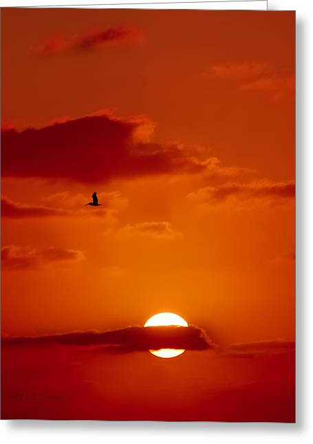 Dawn Flight Greeting Card by DigiArt Diaries by Vicky B Fuller