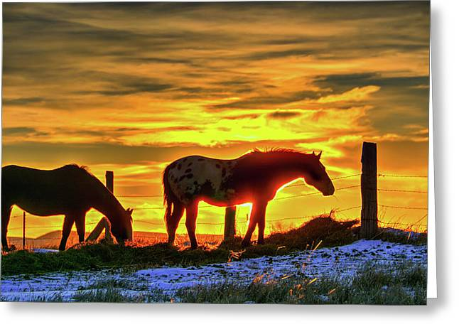 Dawn Horses Greeting Card