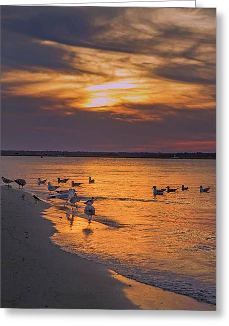 Dawn Of Sunset Greeting Card by Betsy Knapp