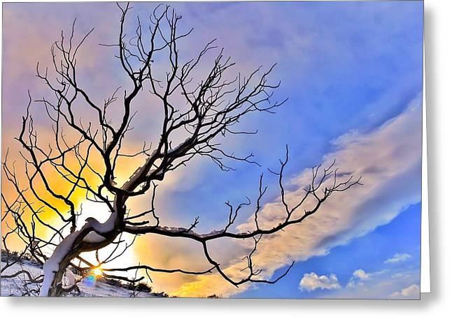 Dawn Of The Dead Tree 1 Greeting Card