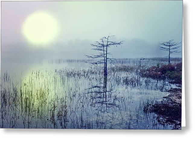 Dawn Over The Glade Greeting Card by Debra and Dave Vanderlaan