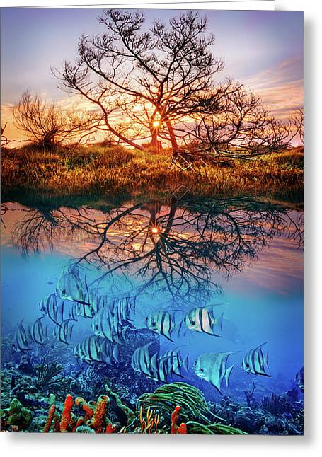 Greeting Card featuring the photograph Dawn Over The Reef by Debra and Dave Vanderlaan
