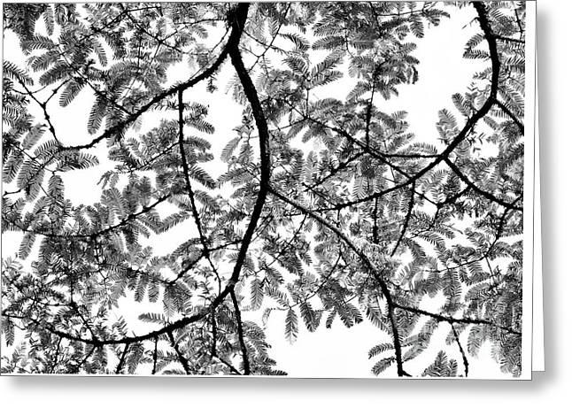 Dawn Redwood Foliage Monochrome Greeting Card by Tim Gainey