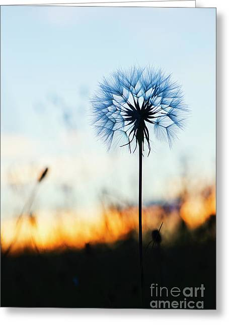 Dawn Seedhead Greeting Card