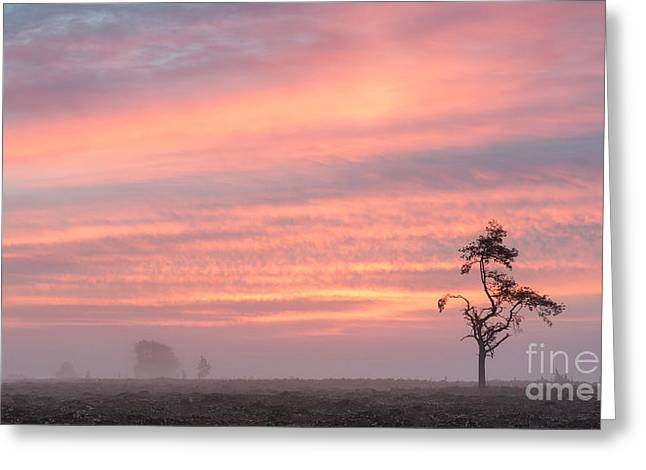 Dawn Survivor New Forest Greeting Card by Richard Thomas