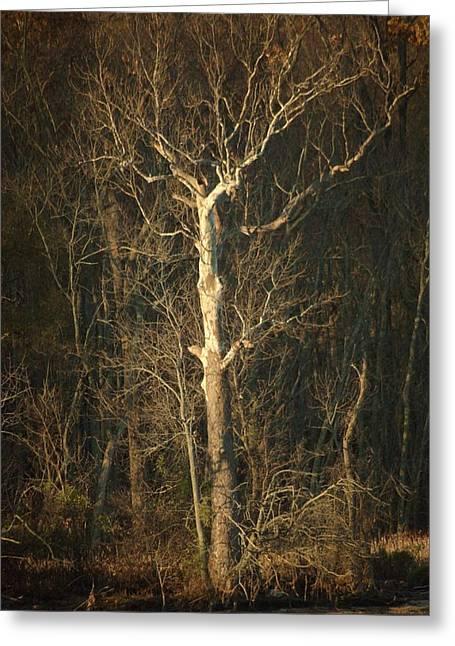 Day Break Tree Greeting Card