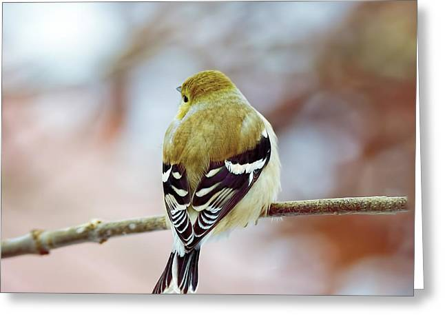 Day Dream Finch Greeting Card
