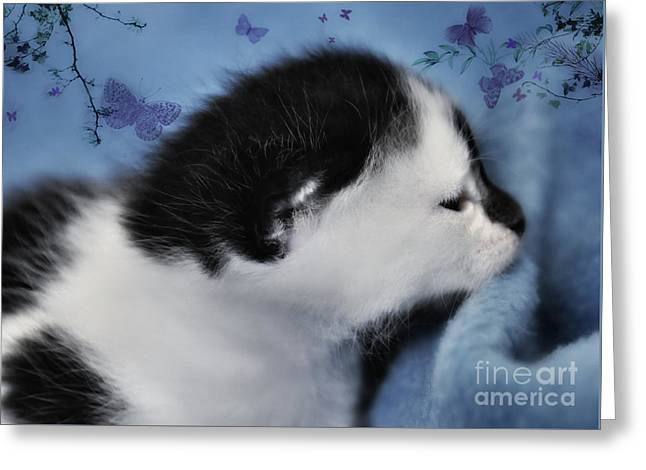 Day Dreaming Greeting Card by Elaine Manley