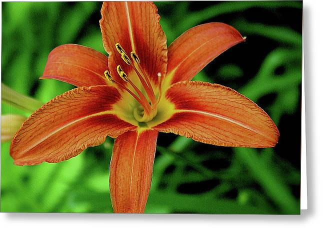 Day Lilly Greeting Card by Nancy Ann Mulcare