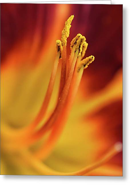 Day Lily Greeting Card