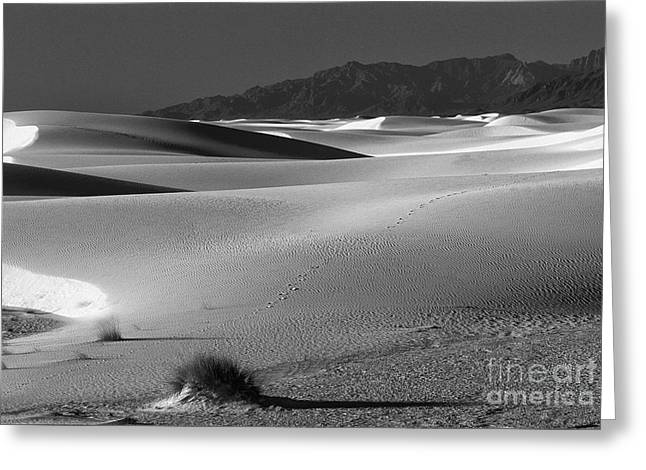 Daybreak At White Sands Greeting Card by Sandra Bronstein