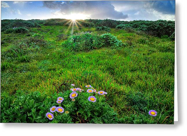 Daybreak On The Central Coast Greeting Card by Lynn Bauer
