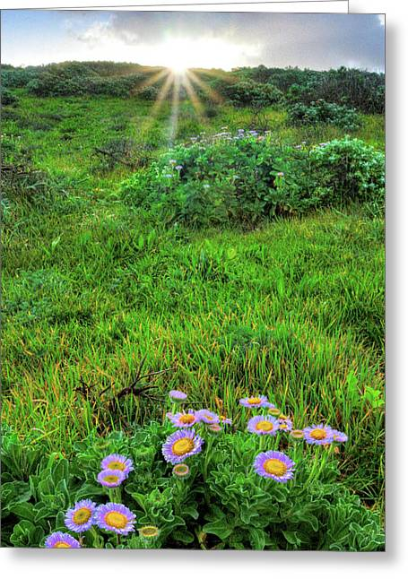 Daybreak On The Central Coast - Vertical Greeting Card by Lynn Bauer